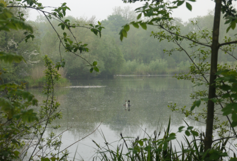 Alderson Large Lake